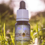 Alchemama 1