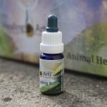 Animal Healing 9