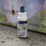 Animal Healing 11
